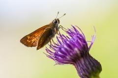 Schmetterling_